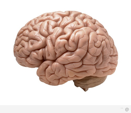 human brain A Guide To Becoming An NLP Practitioner