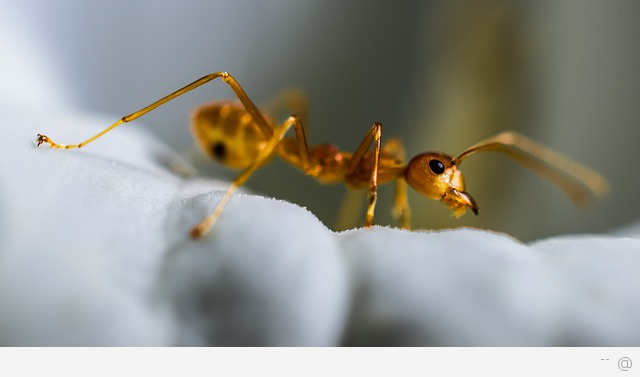 ant Eco Friendly Ways To Get Rid Of Ants