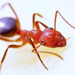 Fire Ant Bites And Stings: Tiny Insects That Cause Great Pain