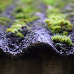 Asbestos; Are Organisations Taking The Potential Health Risks That Asbestos Poses Seriously Enough?