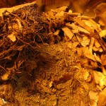 Boost Your Fertility And Health With Chinese Herbs