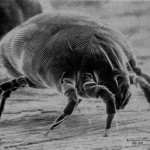 Say Goodbye To Dust Mites Once And For All